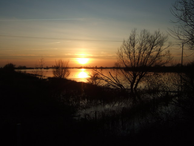Willows - The Ouse Washes at Sutton Gault