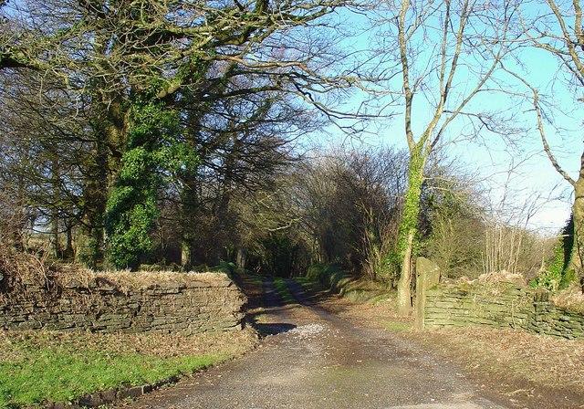 Track to Hafod Grove, Moylgrove