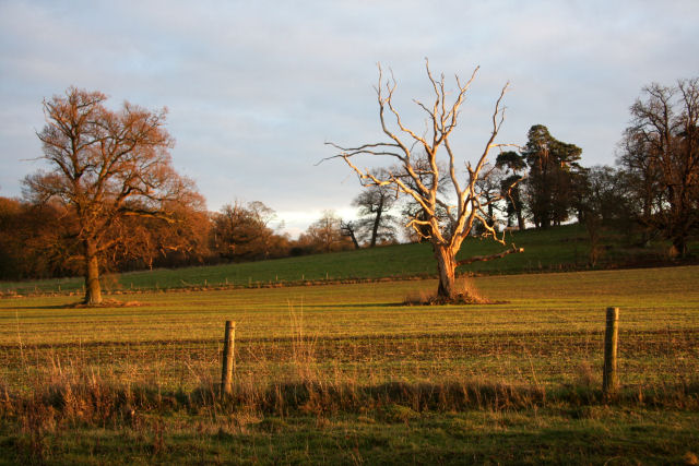 Field and trees in Ickworth Park