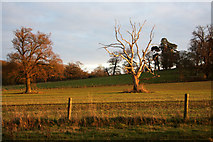 TL8162 : Field and trees in Ickworth Park by Bob Jones