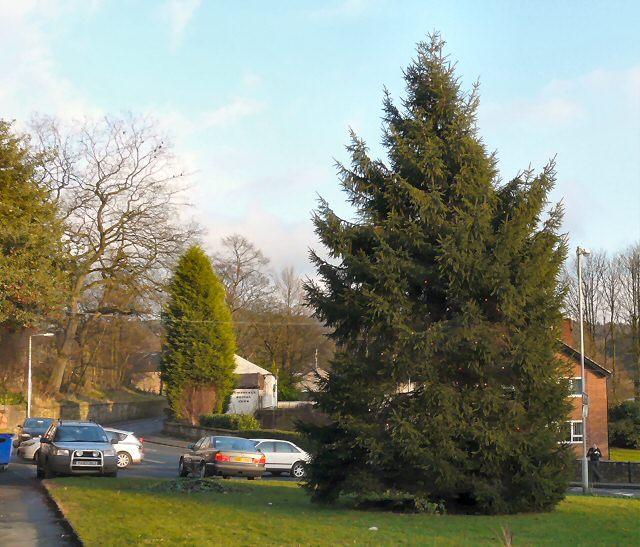 Compstall Christmas Tree 2009