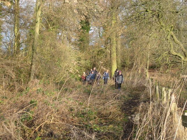 Walkers coming through Kathleen Wood, Piercebridge