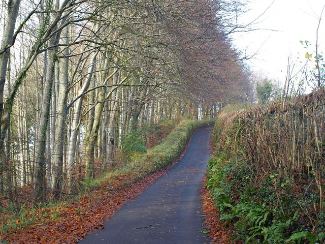Lane above Bickleigh Vale