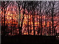 SJ4113 : Sunset through the trees in Ford lay-by by Marion Haworth