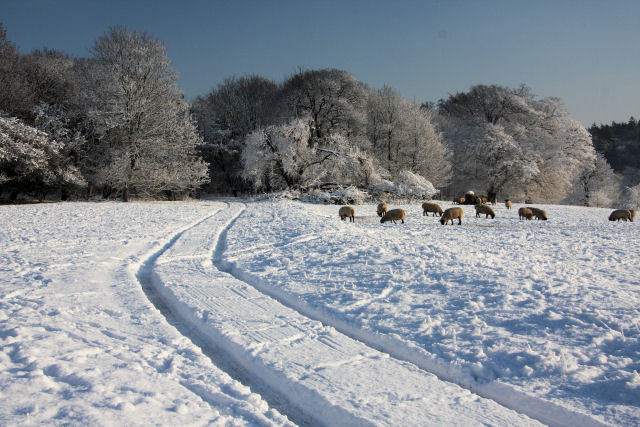 Track across Ickworth Park