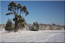 TL8162 : Snow-covered parkland by Bob Jones