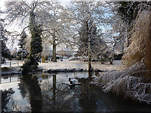 TM0855 : Pond in Needham Market by Andrew Hill