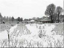 TQ3005 : Rose Garden, Preston Park by Simon Carey