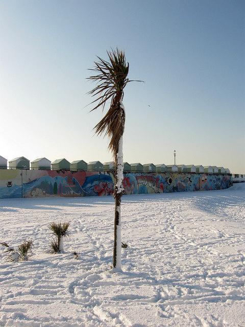 Frozen Palms, Hove Lagoon