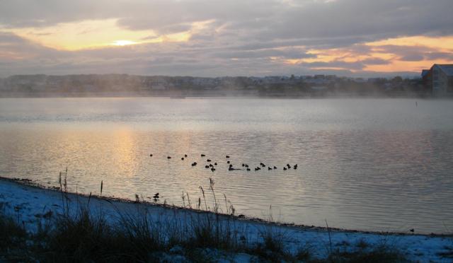 Newburgh: Eiders in the mist