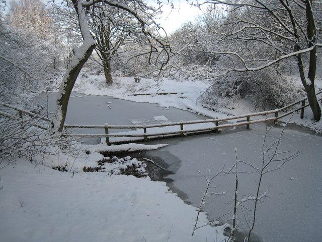 Frozen pond in Flatts Lane Country Park