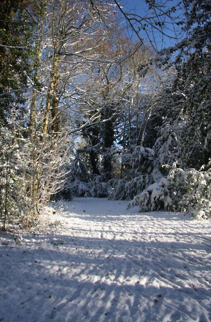 Track through Adkin's Wood, Horringer by Bob Jones