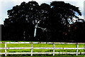 N1677 : Longford - Carrigglas Manor House - Grazing land by Joseph Mischyshyn