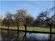 SU9948 : Winter trees on the Wey by Basher Eyre