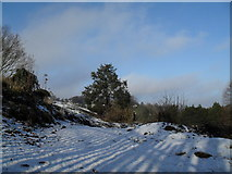 SU9948 : Seasonal tree on the summit of St Catherine's Hill by Basher Eyre