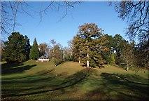 SX8963 : Park, Cockington by Derek Harper