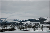 NT2538 : Fields and plantations at Haystoun by Jim Barton