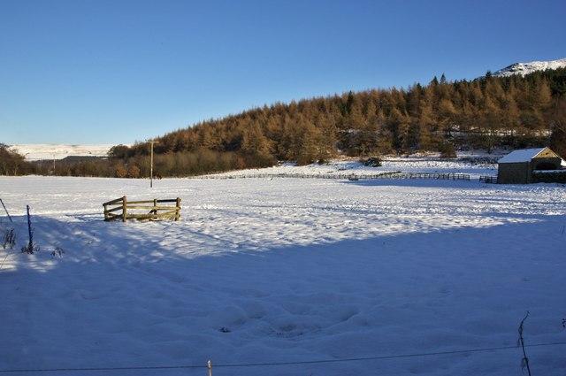 Field, Bank Foot, Ingleby Greenhow