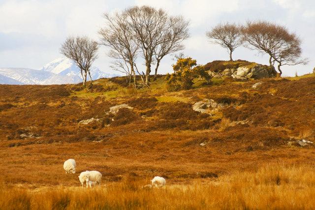 Duirinish common grazings