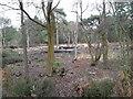 SU4711 : Tree Surgery on Netley Common by dinglefoot