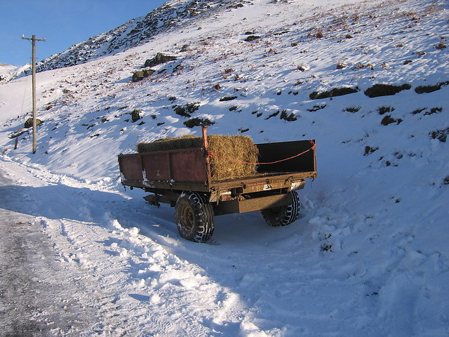 Hay rations for freezing sheep