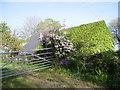 SN1306 : Sardis Cottages by Pauline Evans
