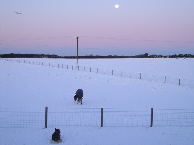 Moon, Bird, Dog & Horse