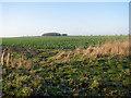 TF7204 : Oilseed rape crop in field west of Eastmoor Road by Evelyn Simak