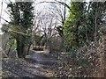 TQ4210 : Woodland in Lewes LNR by Paul Gillett