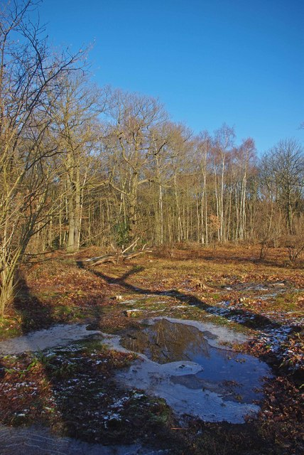 Clearing in Norsey Wood