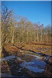 TQ6895 : Clearing in Norsey Wood by Glyn Baker