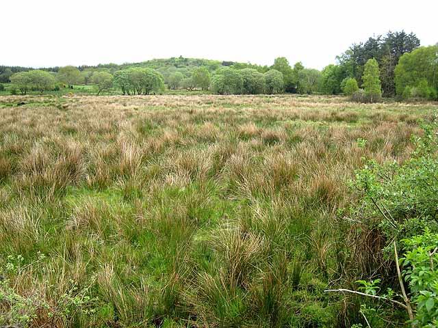 Marshy field at Annagh