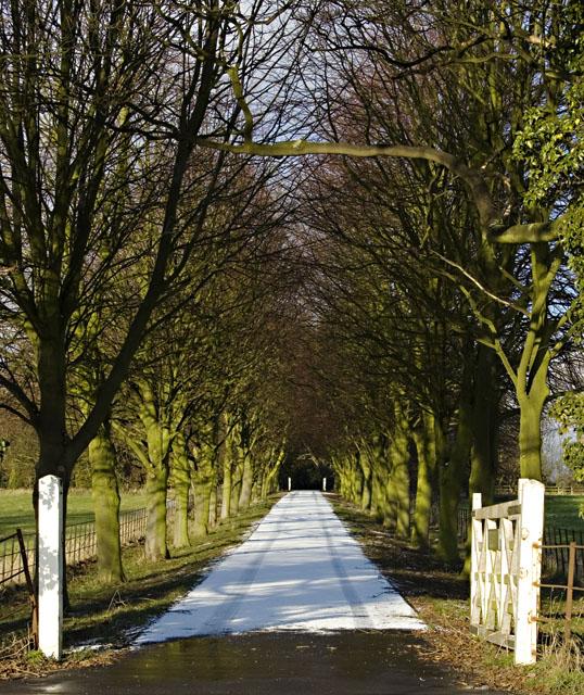 Boreas Hall driveway by Paul Harrop