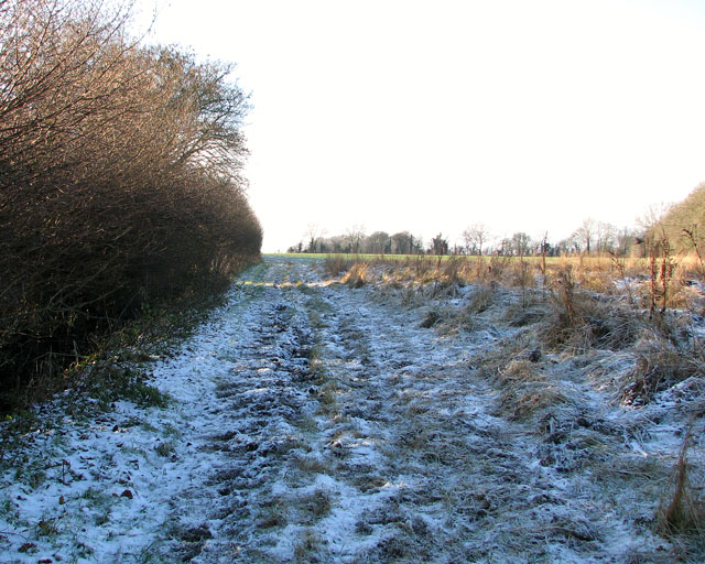 Frosty path along a field's edge