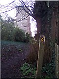 TR0653 : The North Downs Way towards St Marys Church by David Anstiss