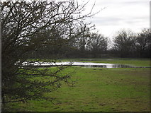 SP2504 : Flooded field by andrew auger