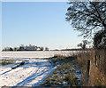 TM3695 : Snowy farm track south of Hales Hall by Evelyn Simak