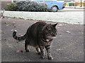SJ7661 : Frosty feline by Stephen Craven