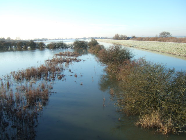 Bushes - The Ouse Washes at Mepal