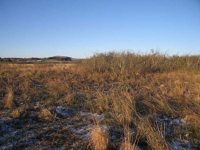 Shrubs in Cors Caron Nature Reserve