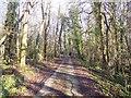 TQ6837 : Farm track towards Forstal Farm by David Anstiss