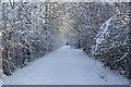 TQ3336 : A snowy Worth Way by Robin Webster
