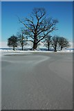 SO8843 : Frozen Croome Park by Philip Halling