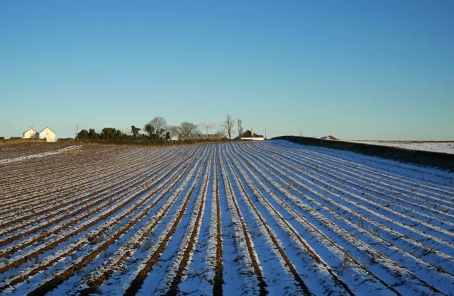 Frozen field  near Scrabo