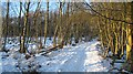 NT1787 : Cullaloe Woods by Richard Webb