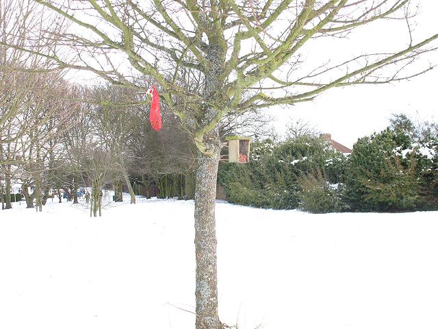 Bird feeders in the snow