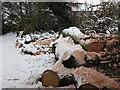 TQ4371 : Log pile near Walden Recreation Ground by Stephen Craven