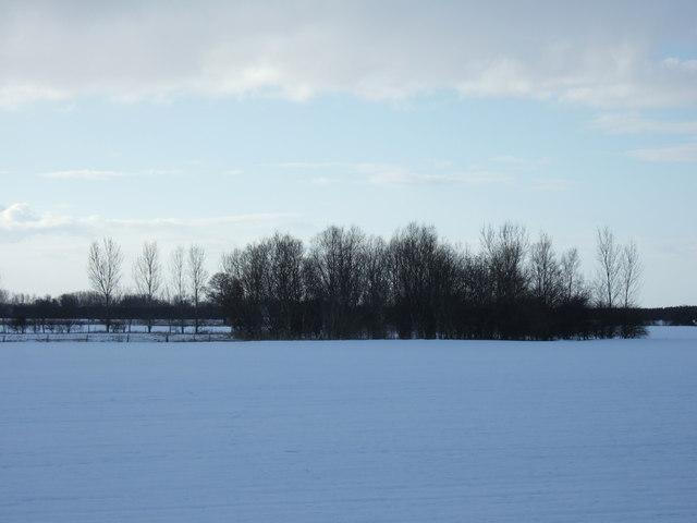 Winter copse