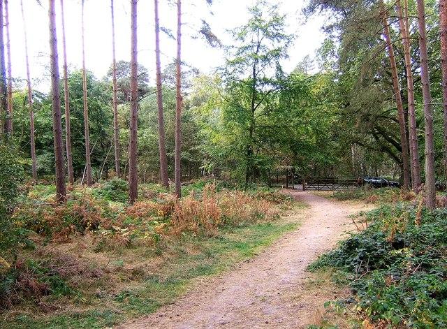 "Public bridleway in ""The Million"" wood"