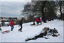 NT2273 : Enjoying the Snow by Anne Burgess